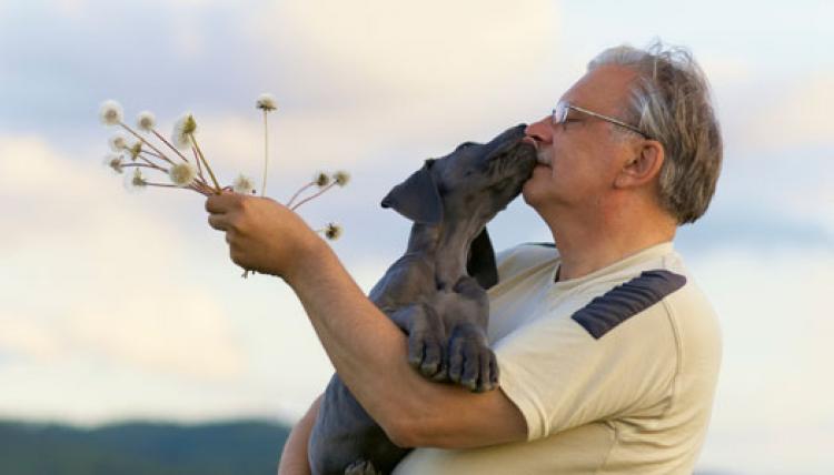 Bli frisk och sund – skaffa katt eller hund