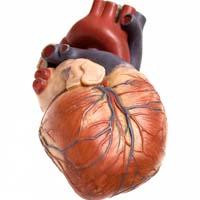 Framtida läkemedel kan öka chansen vid infarkt