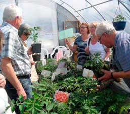 SPF Toarps besök på tomatodling