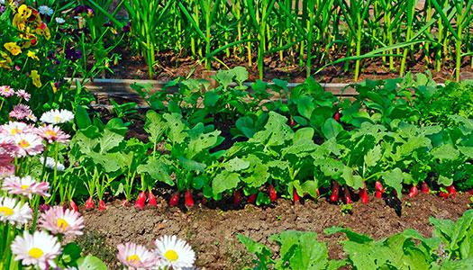 Trädgårdsdrömmar på pränt