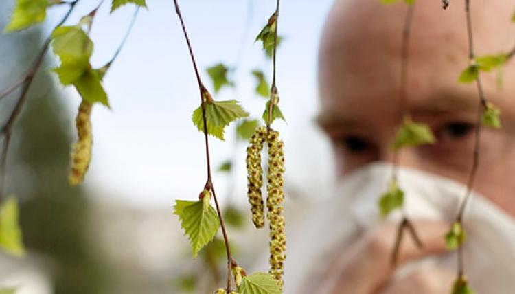 En miljon allergiker lider för mycket