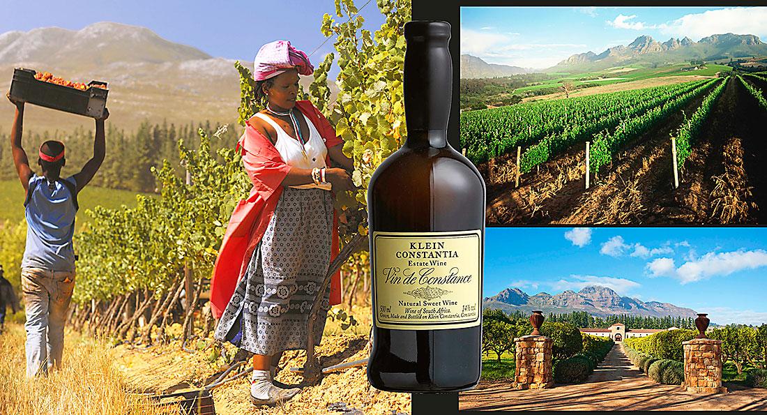 Sju vinparadis i Sydafrika