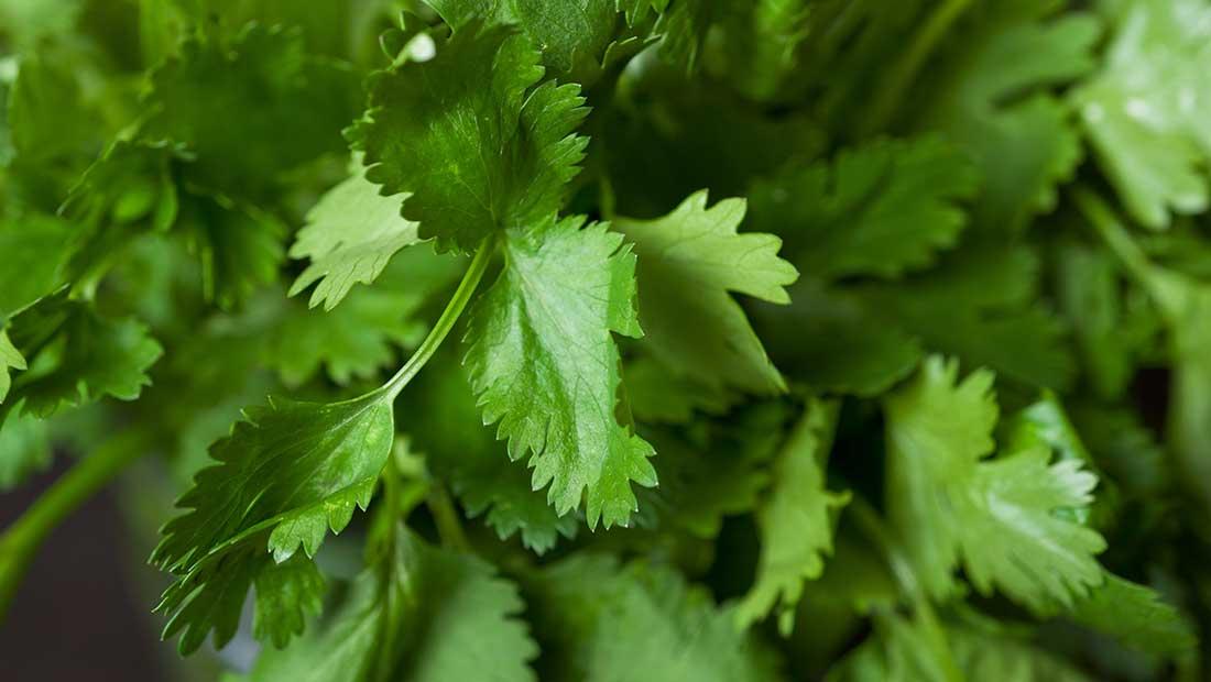 Recept för en grönare vardag