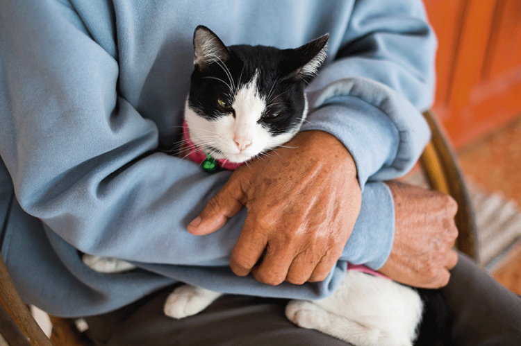 Katten – en vårdande vän