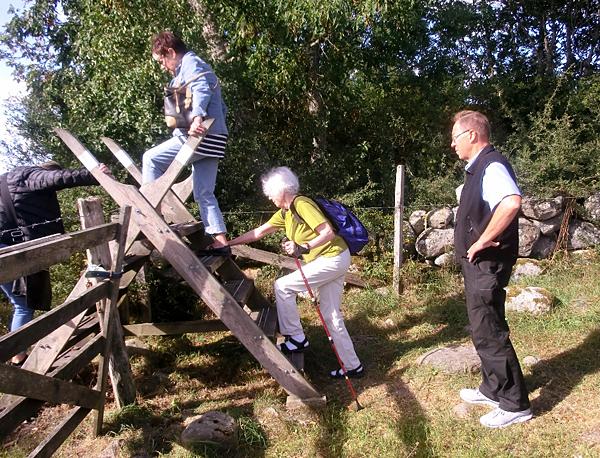 50 kullor och masar intog Gotland
