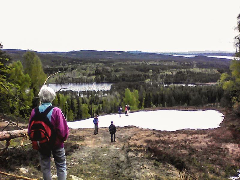 Skogsvandring på Bjursberget