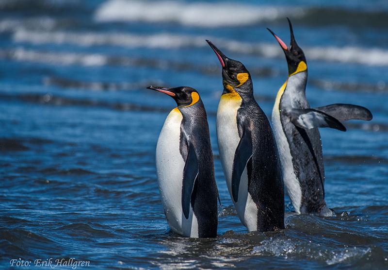 Naturfotografen Erik Hallgren visade bilder från sina resor