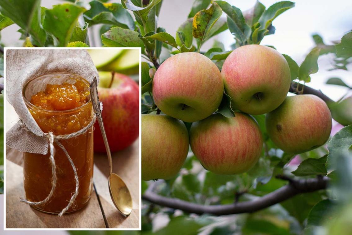 Ta hand om dina äpplen