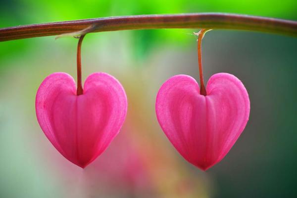 Hitta din hjärtevän på Senioren.se