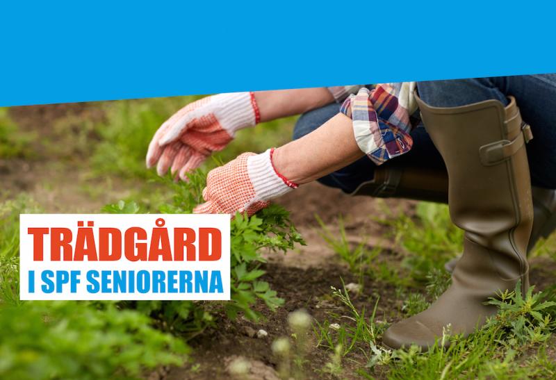 Kom med i SPF Seniorernas trädgårdsgrupp på Facebook!