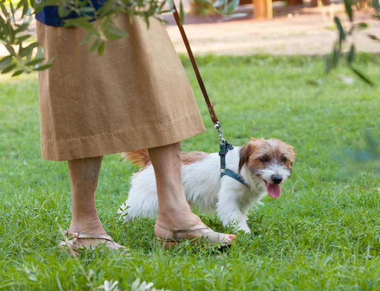 Varning för att gå ut med hunden