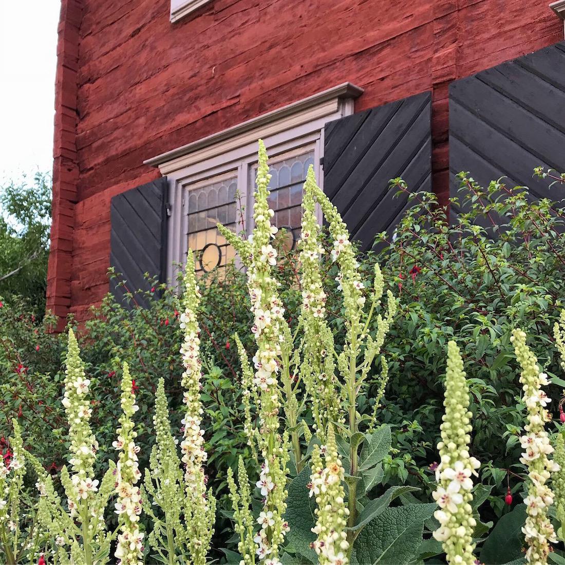 Visby, blommor