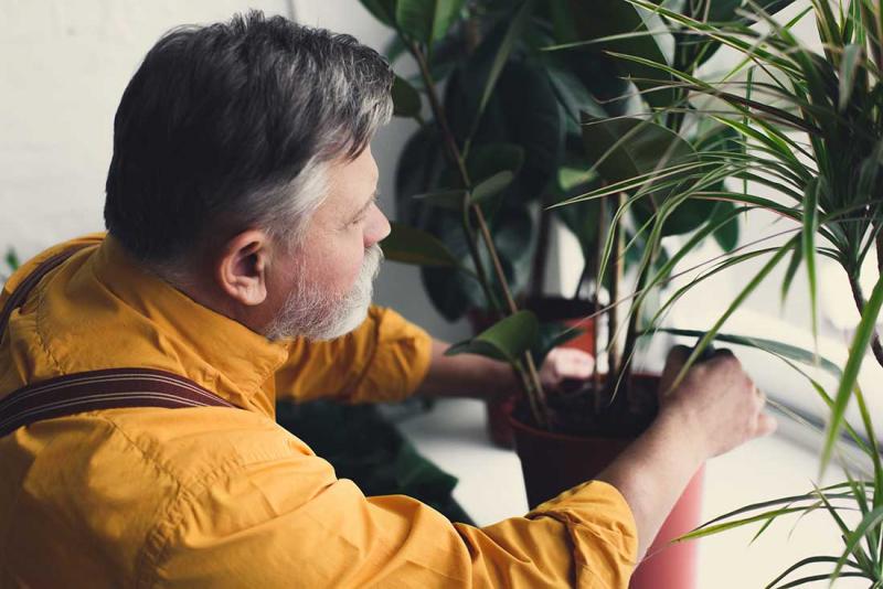Ta hjälp av växterna