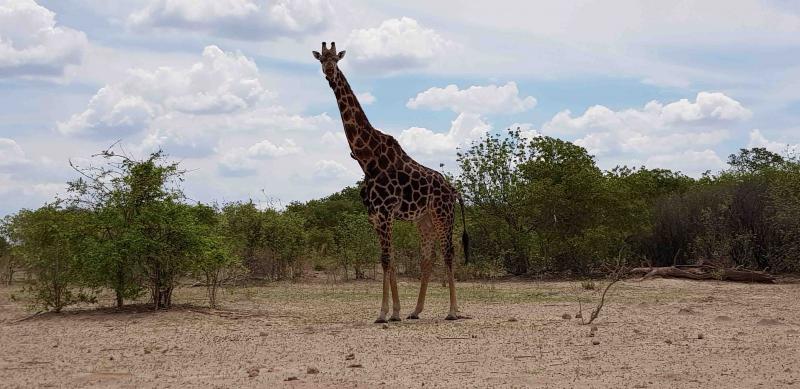 Träskvägen genom södra Chobe Game Reserve