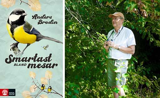Anders Brodin, Smartast bland mesar, bok