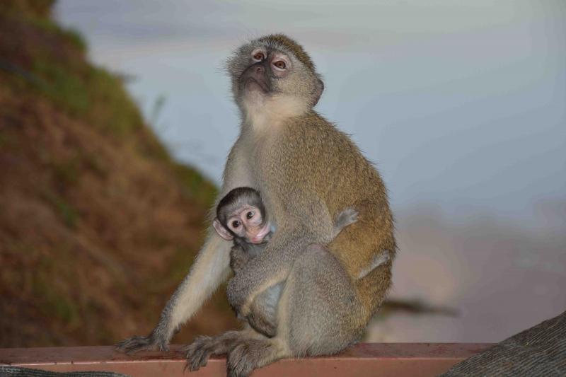 South Luangwa, alla andra djur