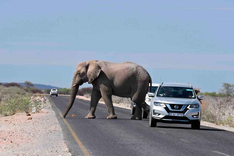Med bil genom Afrika