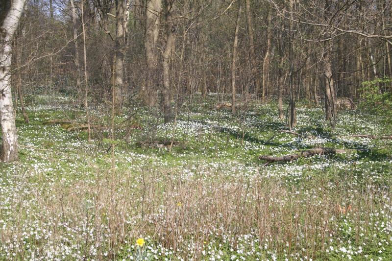 Hoppfullt inför våren trots allt?