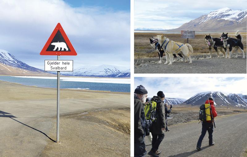 Resa Svalbard – i isbjörnarnas rike