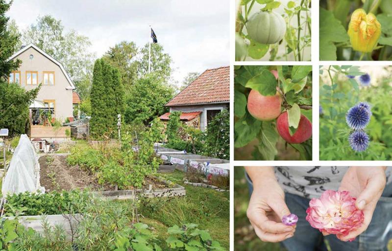 Så här gör du en artrik trädgård