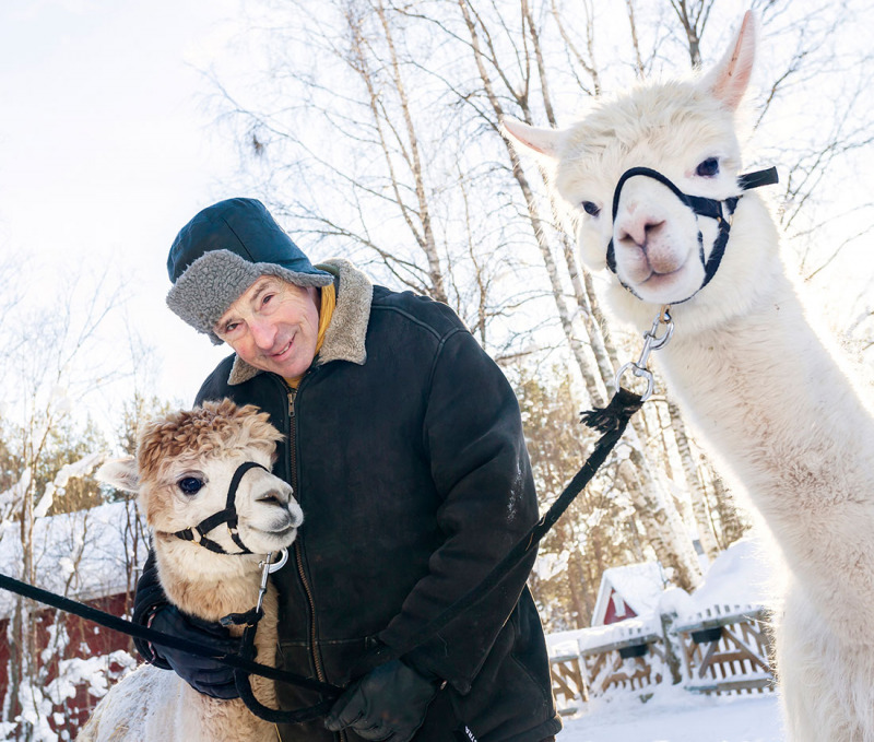 Robert och hans alpackor