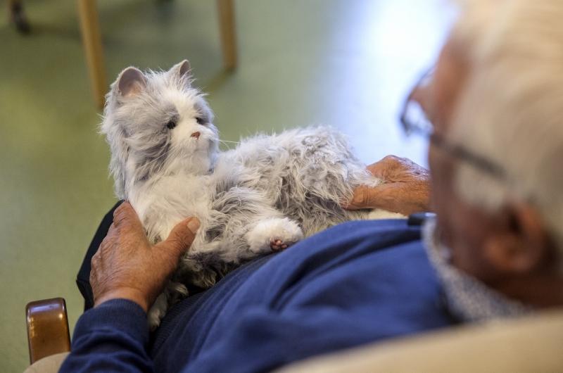 Fler katter och kameror i äldreomsorgen