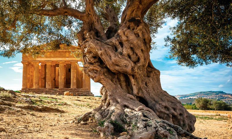 Sicilien – stor ö med ännu större själ