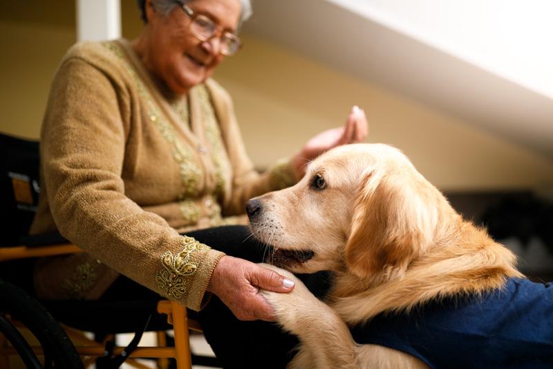 Terapihund ger rätt till rutavdrag